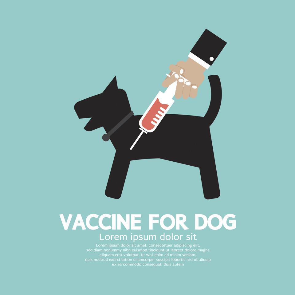 Calendario De Vacunacion Para Perros Y Gatos