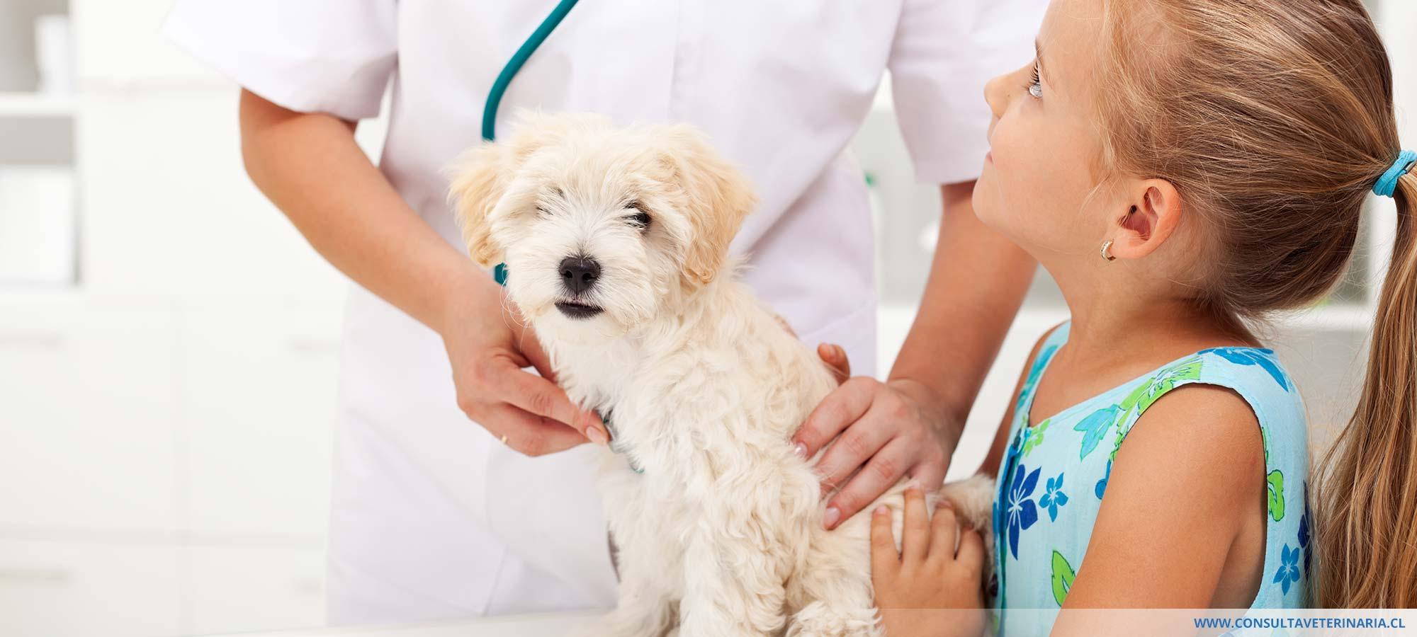 Consulta veterinaria a domicilio